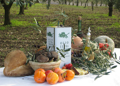 Creanza_Olives_In_Orchard