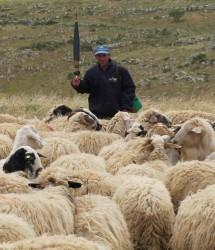 Shepherd Graziantonio Creanza  - Puglia Italy - Lucy Hyslop