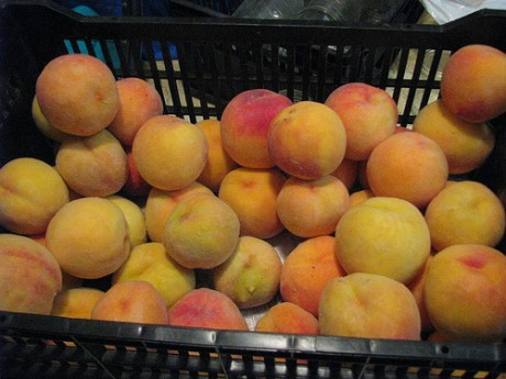 Crate of freestone peaches ready to become bourboned peaches.