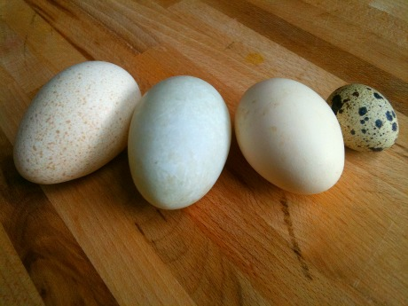 Eggs for spring, natur...