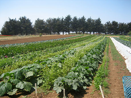 UCSC_farm_rows