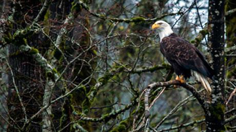Foodists-Brackendale-Sunwolf-Eagle